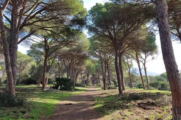 pineta itinerari agriturismi alberese parco della maremma